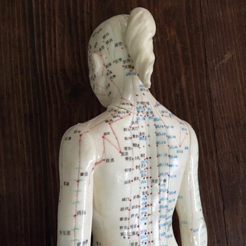 this shows a model of a woman with the acupuncture meridians or channels diagrammed on her back and head