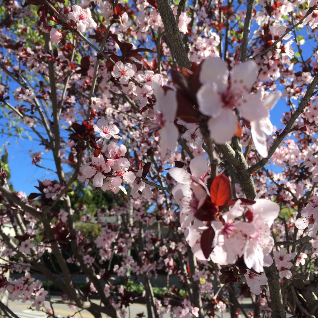 Spring Poem Archives Port Wellness Acupuncture