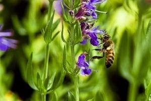 hyssop flower essential oil is associated with fall